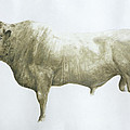 Islay Bull Poster by Lincoln Seligman