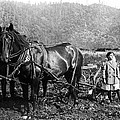 PLOWING the LAND c. 1890 Poster by Daniel Hagerman