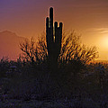 A Sonoran Morning  Print by Saija  Lehtonen