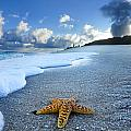 Blue Foam starfish by Sean Davey