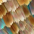 Butterfly Wing Scales Print by Power And Syred