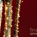 Christmas lights on birch branches Print by Elena Elisseeva