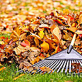 Fall leaves with rake Print by Elena Elisseeva