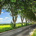 French country road Print by Elena Elisseeva