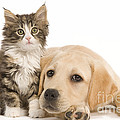 Labrador And Forest Cat Print by Jean-Michel Labat
