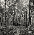 lonely hut in deep forest Print by Setsiri Silapasuwanchai