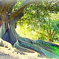 MORTON BAY FIG TREE Poster by LEANNE SEYMOUR