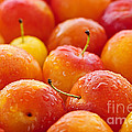 Plums Print by Elena Elisseeva