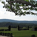 Vineyards in VA - 12124 Poster by DC Photographer