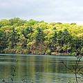 Walden Pond by Catherine Gagne