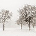 Winter trees in fog Poster by Elena Elisseeva