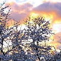 Wintry Sunset Print by Will Borden