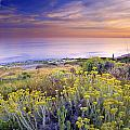 Yellow flowers at the sea Print by Guido Montanes Castillo