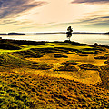 #15 at Chambers Bay Golf Course  Print by David Patterson