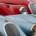 1953 Jaguar XK120 Roadster Print by Jill Reger