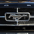 1965 Shelby prototype Ford Mustang Hood Ornament Print by Jill Reger