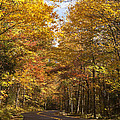 Autumn Drive Print by Andrew Soundarajan