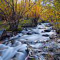 Fall at Big Pine Creek Print by Cat Connor