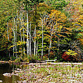 Fall Color River Print by Thomas R Fletcher