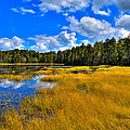 Fly Pond in the Adirondacks Print by David Patterson