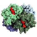 Haemoglobin molecule Print by Science Photo Library
