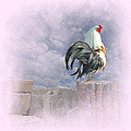 Mr Rooster Print by Jeff Burgess