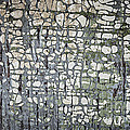 Old painted wood abstract No.6 Print by Elena Elisseeva