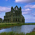 Whitby Abbey Print by Trevor Kersley