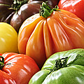 Heirloom tomatoes Print by Elena Elisseeva