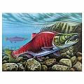 Sockeye Salmon by JQ Licensing