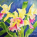 Three Cattleya's Poster by Kathleen Rutten
