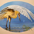 398 - Fishing Egret Poster by Sigrid Tune