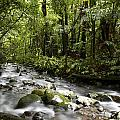 Jungle stream Print by Les Cunliffe
