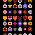 48 Flower Mandalas Print by David J Bookbinder