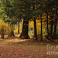 Autumn Poster by Angela Doelling AD DESIGN Photo and PhotoArt