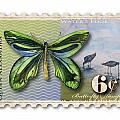 6 Cent Butterfly Stamp Print by Amy Kirkpatrick
