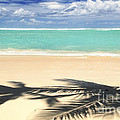 Tropical beach Print by Elena Elisseeva