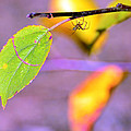 A branch with leaves Print by Toppart Sweden