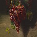 A Bunch Of Grapes Print by Andrew John Henry Way