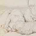 A Dead Stag Print by Sir Edwin Landseer