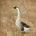 A Goose is a Goose Poster by Betty LaRue