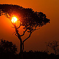A Memorable Savanna Sunset Kundelungu National Park DR Congo Print by Robert Ford