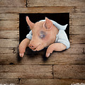 a pig and a poke... Poster by Will Bullas