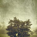 A Tree in the Fog 2 Print by Scott Norris