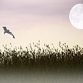 ABOVE THE TALL GRASS Poster by Tom York Images