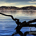 Adrift Reflection Print by Cheryl Young