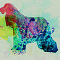 Afghan Hound Watercolor Poster by Irina  March