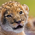 Age of Innocence Print by Ashley Vincent