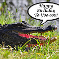 Alligator Birthday Card Poster by Al Powell Photography USA
