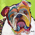 American Bulldog by Michel  Keck